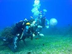България, подводни спортове, Гмуркане и сърф